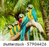 A group of colorful macaw on the tree - stock photo
