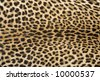 Close-up of surface skin leopard (Panthera pardus) - stock photo