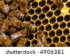 Close up view of working bee on honeycells. - stock photo