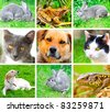 Collage of animals images. ( cat, dog, lizard, frog, rabbit ) - stock photo