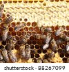 honey cells and working bees - stock photo