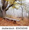 Last golden tree leafs and benchs in autumn forest - stock photo