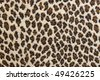 Leopard prints - stock photo