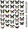 Many butterflies isolated on a white background - stock photo