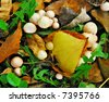 Mushrooms in a forest - stock photo