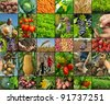 organic farming - stock photo