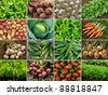 organic vegetables and greens - stock photo
