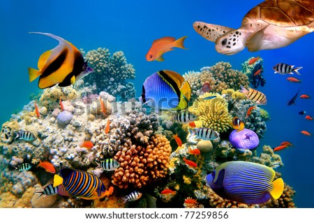 Photo of a tropical fish and turtle on a coral reef stock image