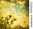 Retro image of dandelion field at sunset. - stock photo