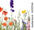 Wild flowers against a white background - stock photo