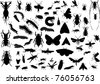 illustration with insect silhouettes isolated on white background - stock vector