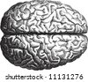 Old-time engraving of the Brain - stock vector