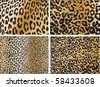Seamless animal pattern skin fur vector pack - stock vector