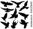Variety of  Pigeon Silhouettes. This Pigeon illustration is perfect for a variety of different design projects. - stock vector